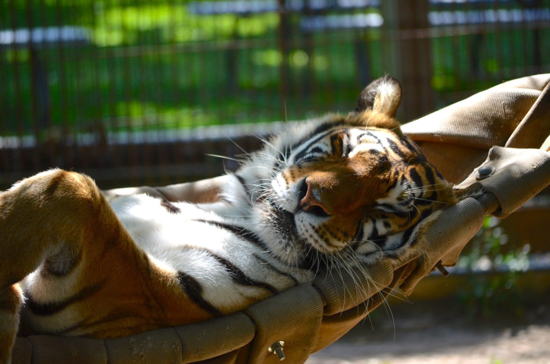Crown Ridge Tiger Sanctuary